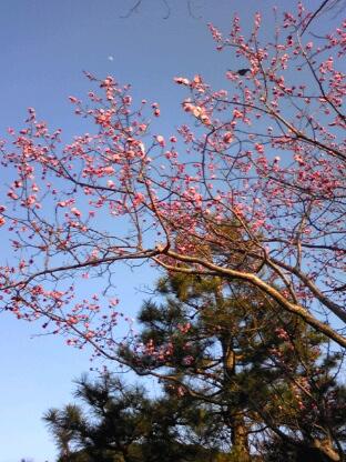 祇園・円山公園の花に鳥と月